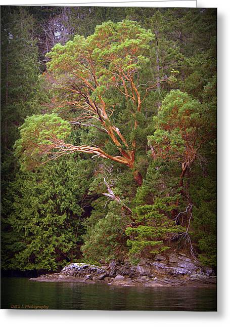Arbutus - Dodd Narrows Greeting Card by Dorothy Hilde