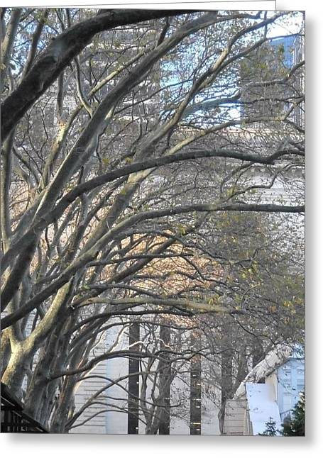 Bryant Park Greeting Cards - Arched Trees Greeting Card by Kimberly Perry
