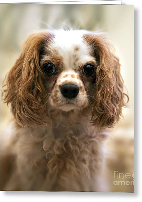 Scruffy Greeting Cards - Archie portrait Greeting Card by Jane Rix