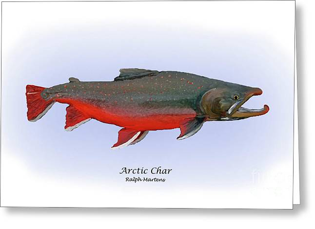 Trout Fishing Drawings Greeting Cards - Arctic Charr Greeting Card by Ralph Martens