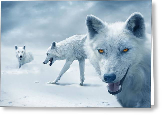 Arctic Greeting Cards - Arctic Wolves Greeting Card by Mal Bray