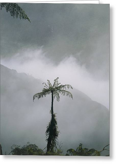 Deforestation Greeting Cards - Area Of Cleared Cloudforest, Juval Valley, Ecuador Greeting Card by Dr Morley Read