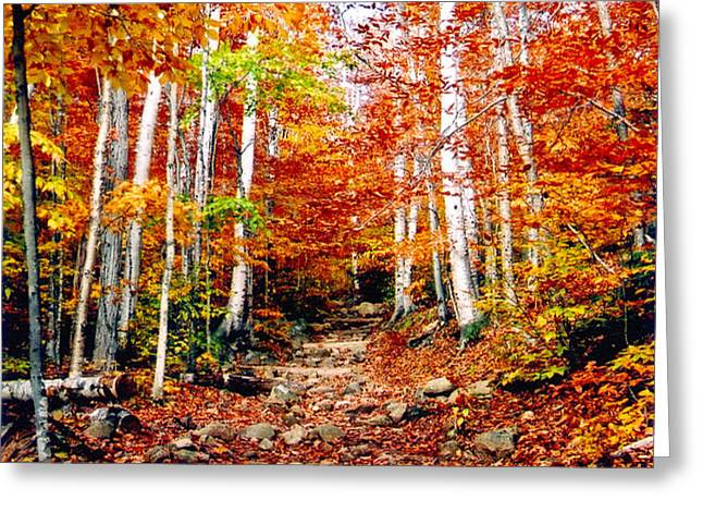 Arethusa Falls Trail Greeting Card by Greg Fortier