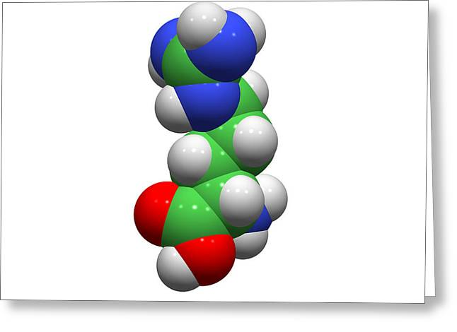 Single-celled Greeting Cards - Arginine Molecule Greeting Card by Dr Tim Evans