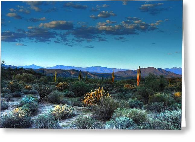 Tam Ryan Greeting Cards - Arizona Desert Greeting Card by Tam Ryan