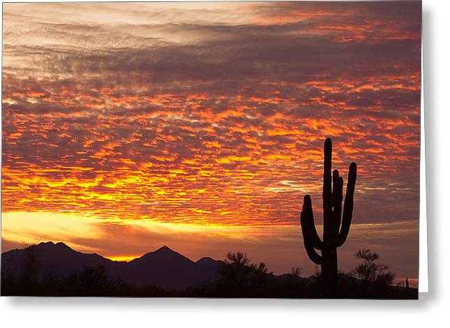 Poster Graphics Greeting Cards - Arizona November Sunrise With Saguaro   Greeting Card by James BO  Insogna