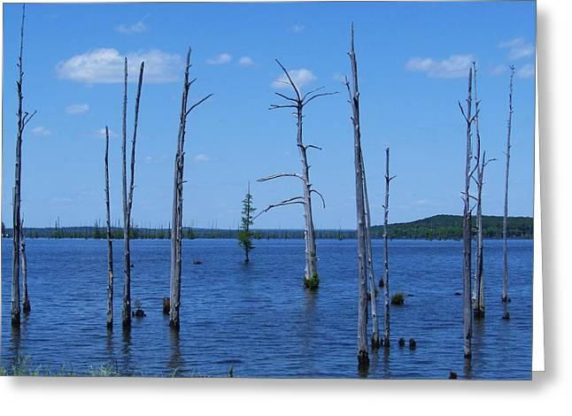 Arkansas Lake Greeting Card by TODD SHERLOCK