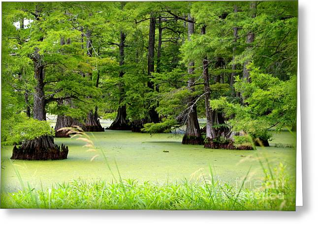 Arkansas Greeting Cards - Arkansas Lake with Cypresses Greeting Card by Carol Groenen