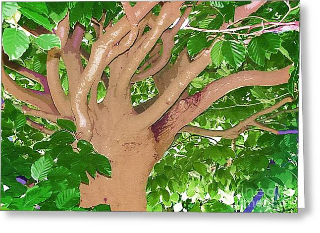 Tree Limbs Greeting Cards - Arms of Nature Greeting Card by Deborah MacQuarrie