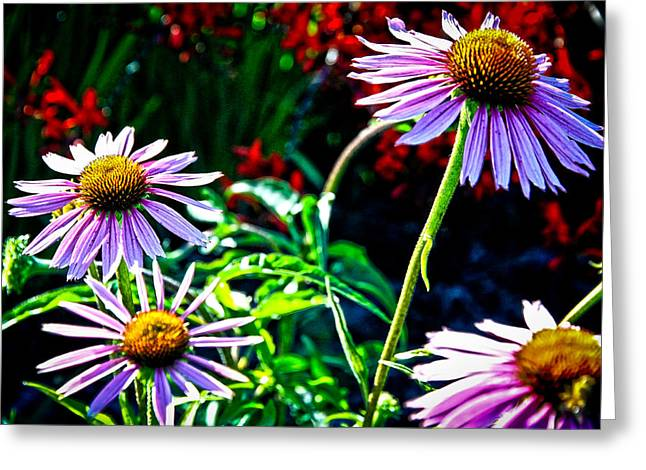 Abstracted Coneflowers Greeting Cards - Art and Flowers Greeting Card by Steve McKinzie
