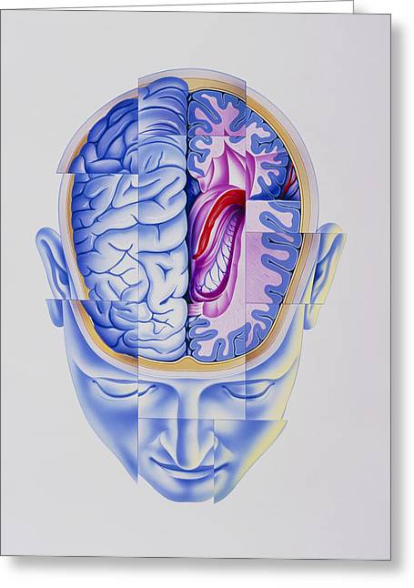 Psychiatric Greeting Cards - Art Of Abstract Head Showing Brain Limbic System Greeting Card by John Bavosi