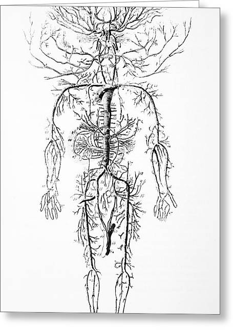 Circulatory System Greeting Cards - Arterial System, 18th Century Greeting Card by