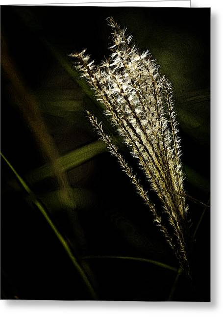 Pampas Grass Greeting Cards - Artistic Image of Pampas Grass Greeting Card by M K  Miller