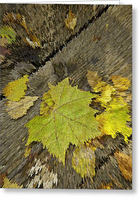 Fallen Leaf Greeting Cards - Artsy Autumn Leaves on Wood Greeting Card by M K  Miller