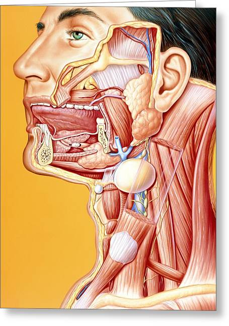 Calculus Greeting Cards - Artwork Of Mouth/neck: Tumour, Cyst, Duct Calculus Greeting Card by John Bavosi