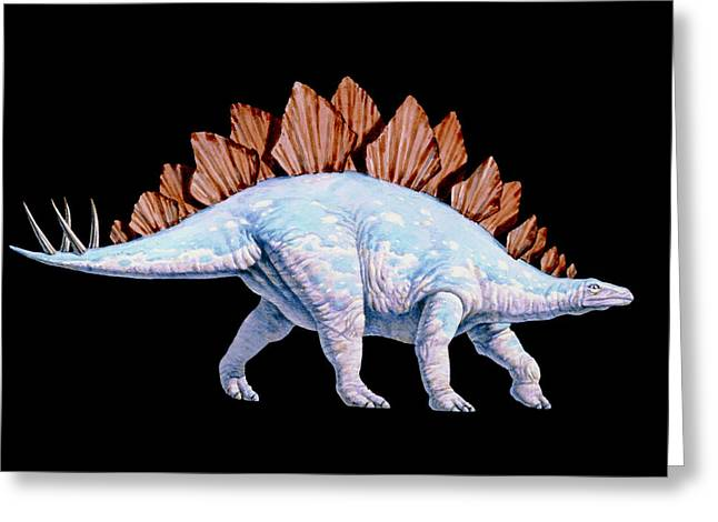 Stegosaurus Greeting Cards - Artwork Of Stegosaurus Dinosaur, Stegosaurus Sp. Greeting Card by Joe Tucciarone