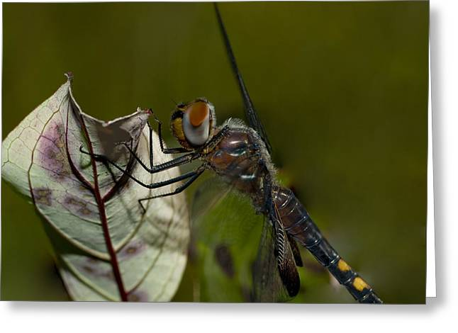 Large Photos Greeting Cards - As Close As You Can Be Greeting Card by Jack Zulli