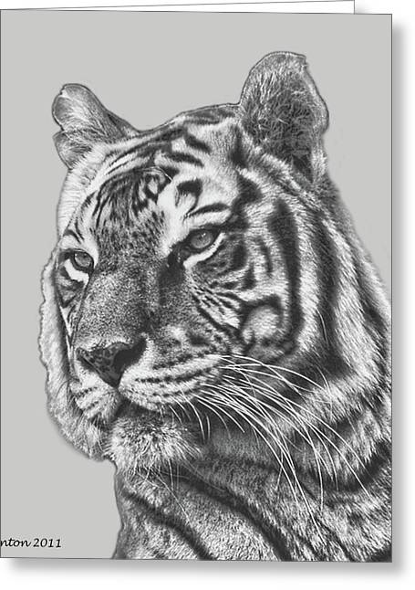 Asian Tiger Greeting Cards - Asian Tiger 2 Greeting Card by Larry Linton