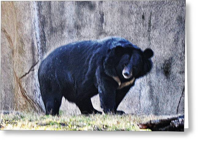 Asiatic Greeting Cards - Asiatic Black Bear Greeting Card by Bill Cannon