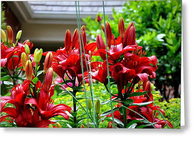 Searcy Greeting Cards - Asiatic Lilies 1 Greeting Card by Tanya  Searcy