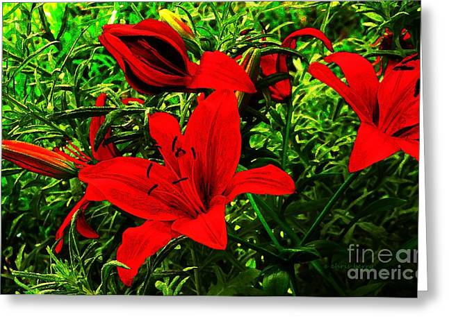 Yearly Greeting Cards - Asiatic Lily and Silver Fox  Greeting Card by Chris Berry