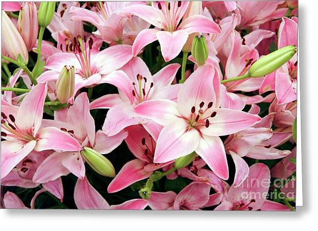 Lilium Greeting Cards - Asiatic Lily (lilium vermeer) Greeting Card by Cordelia Molloy