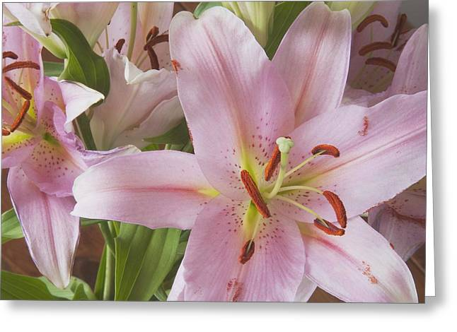 Day Lilly Greeting Cards - Asiatic Lily Greeting Card by Michael Interisano