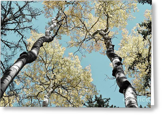 Birch Tree Greeting Cards - Aspen Brilliance Greeting Card by Andrea Hazel Ihlefeld