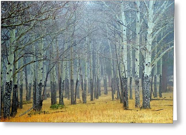 Aspens In Fall Greeting Cards - Aspen Fog Greeting Card by Ken Smith