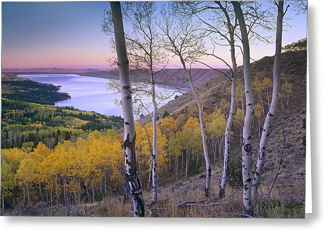Bridger Teton Greeting Cards - Aspen Forest Overlooking Fremont Lake Greeting Card by Tim Fitzharris
