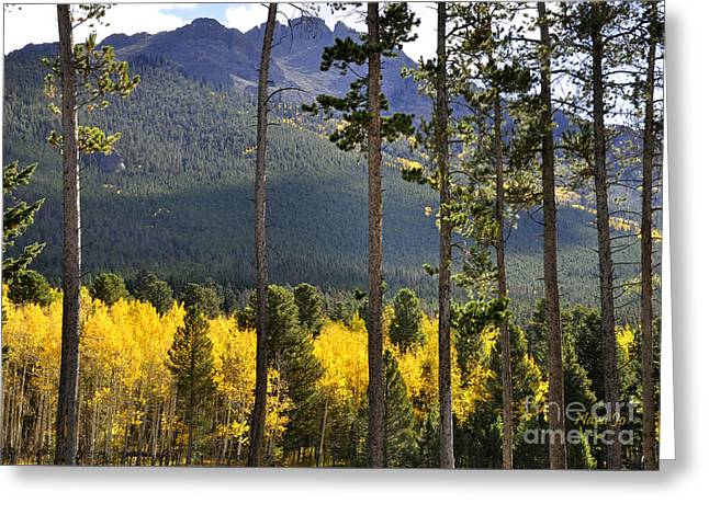 Nature Scene Greeting Cards - Aspen Heaven Longs Peak Area Greeting Card by Nava  Thompson