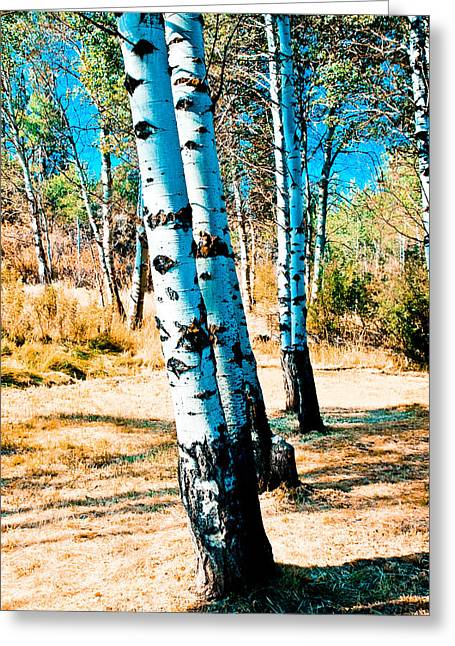 Modern Photographs Greeting Cards - Aspen Trees With Color Greeting Card by Athena Mckinzie