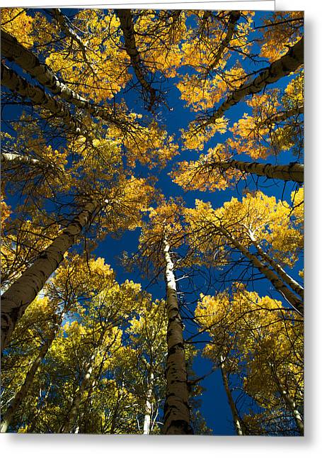 Nature Scene Greeting Cards - Aspen Views Greeting Card by About Light  Images