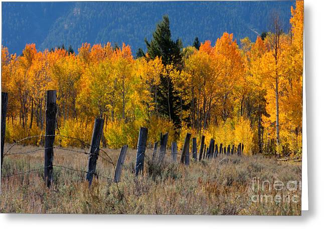Fenceline Greeting Cards - Aspens and Fence Greeting Card by Idaho Scenic Images Linda Lantzy
