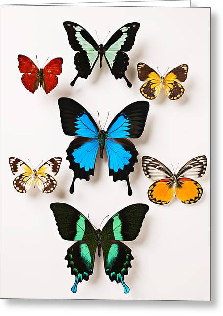 Coloured Greeting Cards - Assorted butterflies Greeting Card by Garry Gay