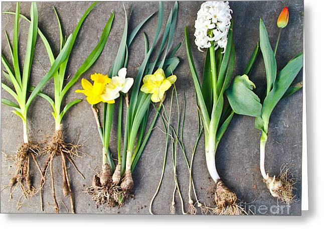 Harvest Time Greeting Cards - Assorted Spring Flowers Greeting Card by Photo Researchers, Inc.