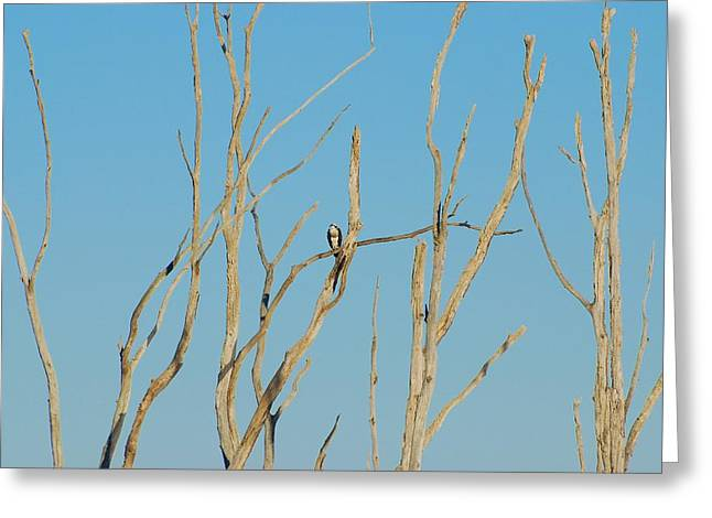 Howell Greeting Cards - Assortment Of Perches - Manasquan Reservoir Greeting Card by Angie Tirado