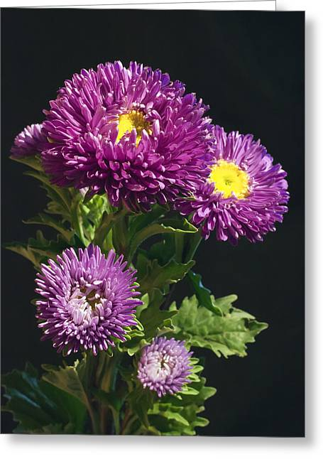 Asters Greeting Cards - Aster Greeting Card by Daniel Csoka