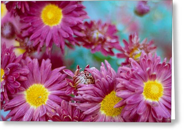 Asters Greeting Card by Marcio Faustino