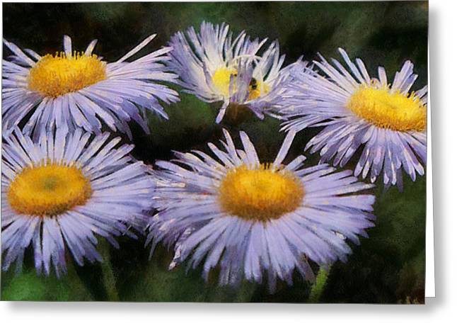 Aster Greeting Cards - Asters Painterly Greeting Card by Ernie Echols