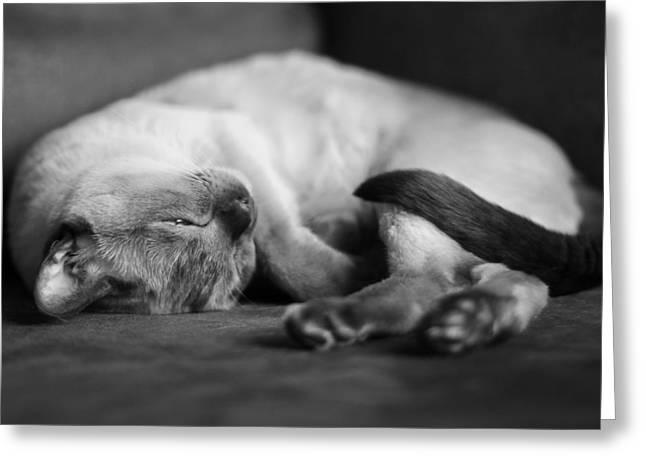 Napping Cat Greeting Cards - Astir Greeting Card by Robin Konarz