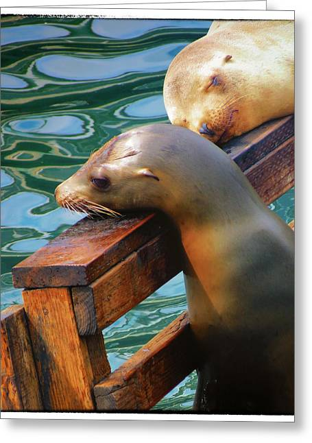 California Sea Lions Greeting Cards - At Rest Greeting Card by Diane Wood