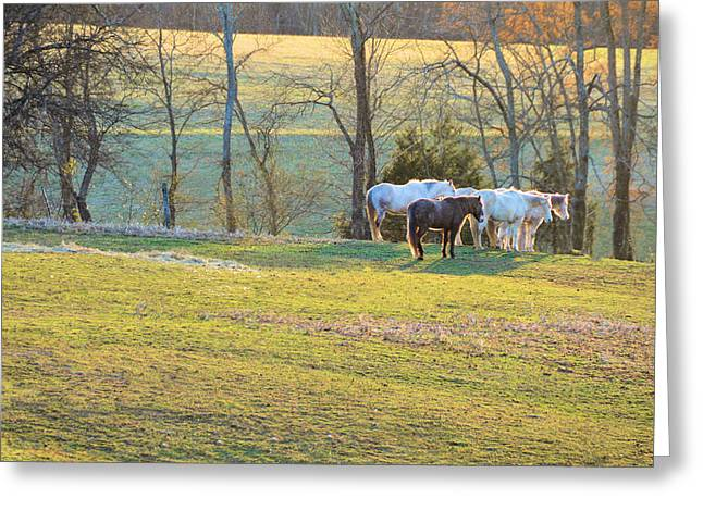 Tennessee Farm Greeting Cards - At The End Of The Day Greeting Card by Jan Amiss Photography