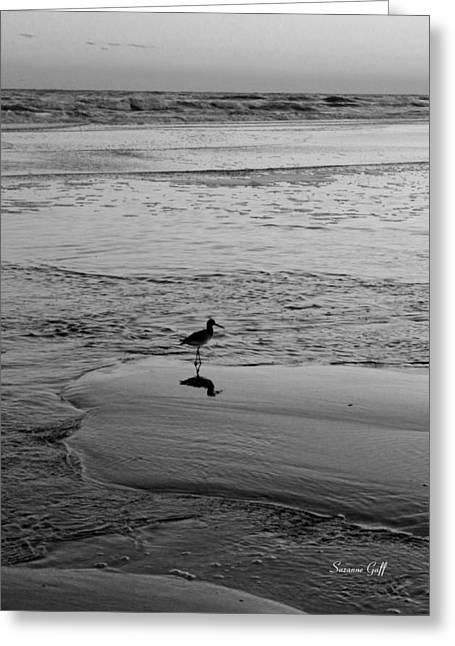 Tern Greeting Cards - At Twilight in Black and White Greeting Card by Suzanne Gaff
