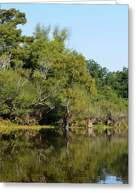 River Flooding Greeting Cards - Atchafalaya Basin 7 Greeting Card by Maggy Marsh