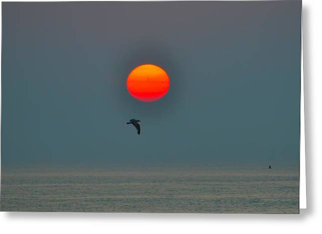 Flying Seagull Greeting Cards - Atlantic City Sunrise Greeting Card by Bill Cannon