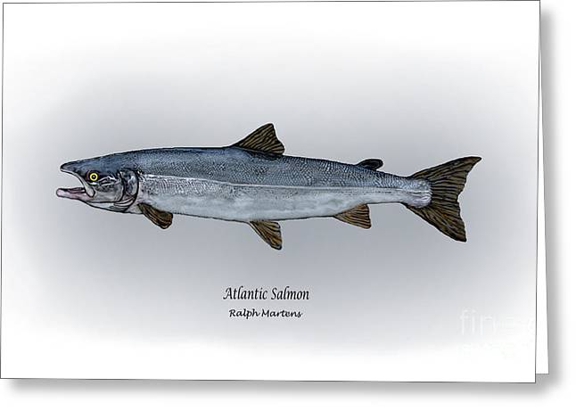 Salmon Drawings Greeting Cards - Atlantic Salmon Greeting Card by Ralph Martens