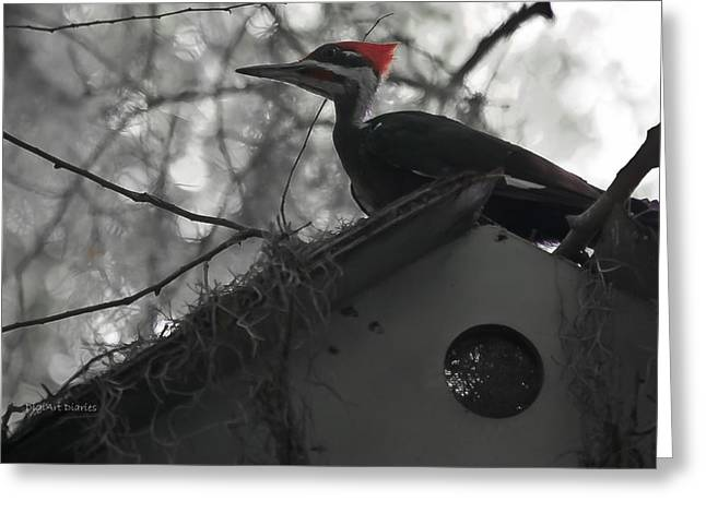 Pileated Woodpeckers Greeting Cards - Atop the Bird Shack Greeting Card by DigiArt Diaries by Vicky B Fuller