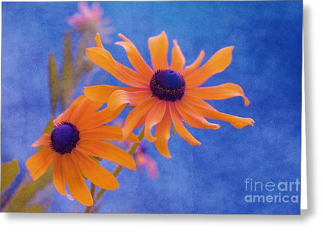 Texture Flower Greeting Cards - Attachement - s11at01d Greeting Card by Variance Collections
