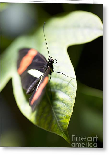 Leda Photography Greeting Cards - Attention Greeting Card by Leslie Leda